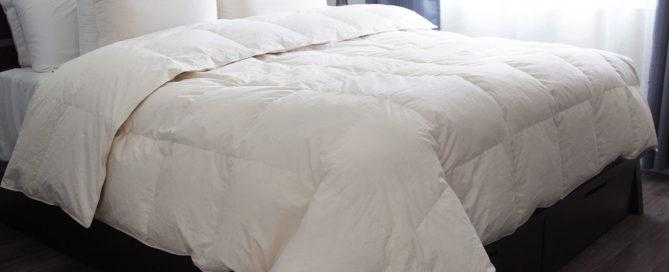 Organic Feather and Down Duvet & Pillow by Allied home