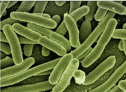 Microbial growth in textiles
